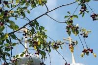 В праздник первоверховных апостолов Петра и Павла архиепископ Антоний совершил литургию в Петропавловском храме Мценска. 12 июля 2012 г.