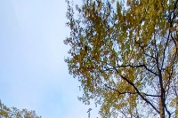 В день памяти прп. Амвросия Оптинского митрополит Орловский и Болховский Тихон совершил Литургию в скиту Новомучеников и исповедников Российских города Орла. 23 октября 2020 г.